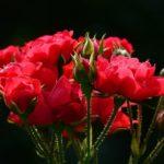 Devis Crémation – coûts funéraires